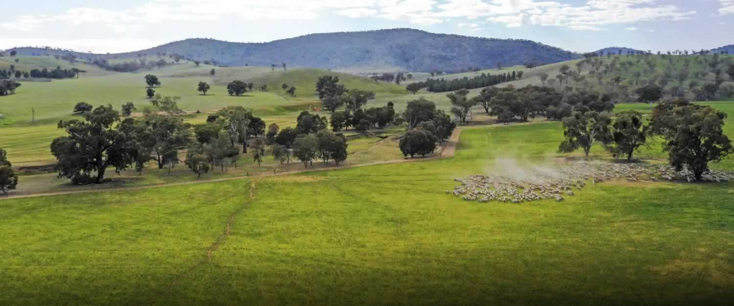 for-sale-coreena-east-Riverina-nsw-4-35917