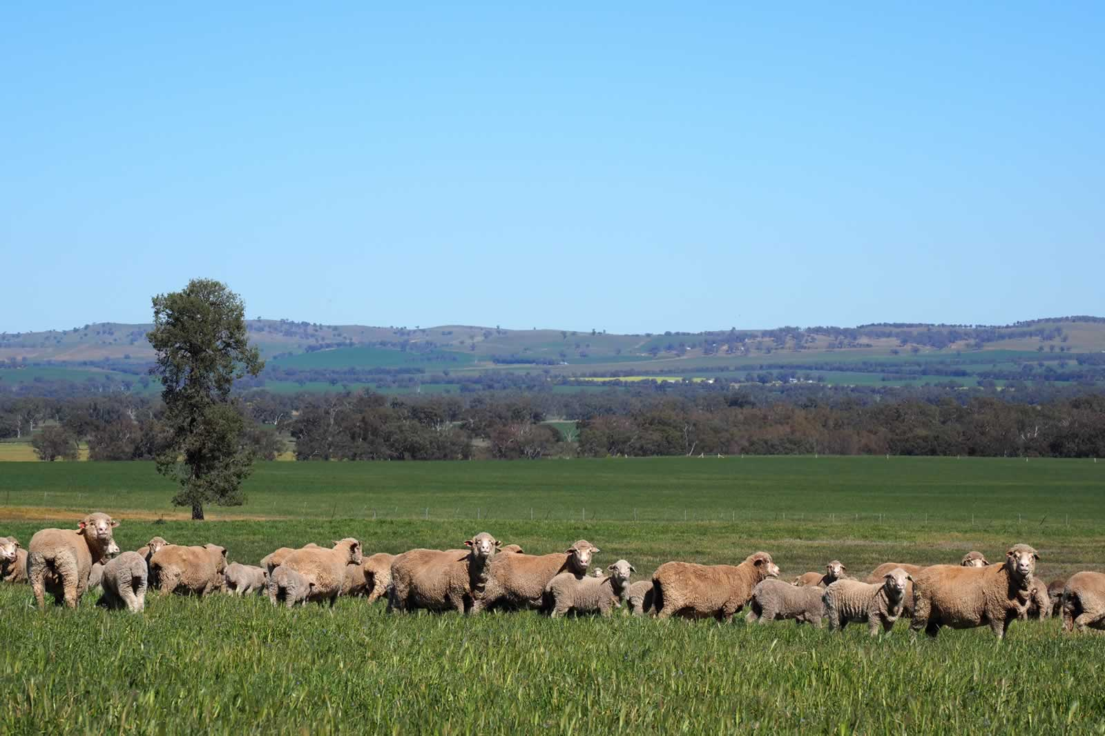 PRESS RELEASE: Coreena East, Eurongilly – Eastern Riverina NSW:image property-sale-nsw-australia