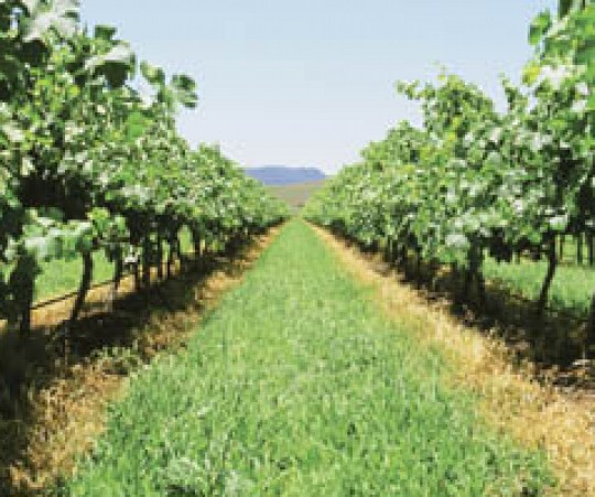 Pyramid Hill - Vineyard property for sale NSW australia