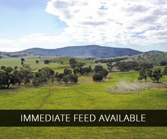 Property for sale Riverina NSW - Coreena East