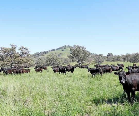 hunter valley nsw farm for sale