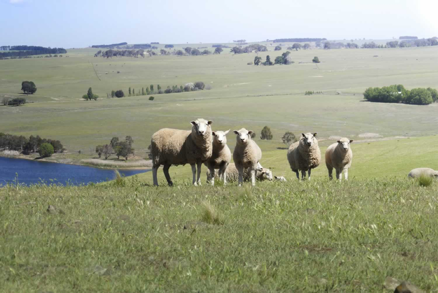 rural property for sale Southern NSW Australia