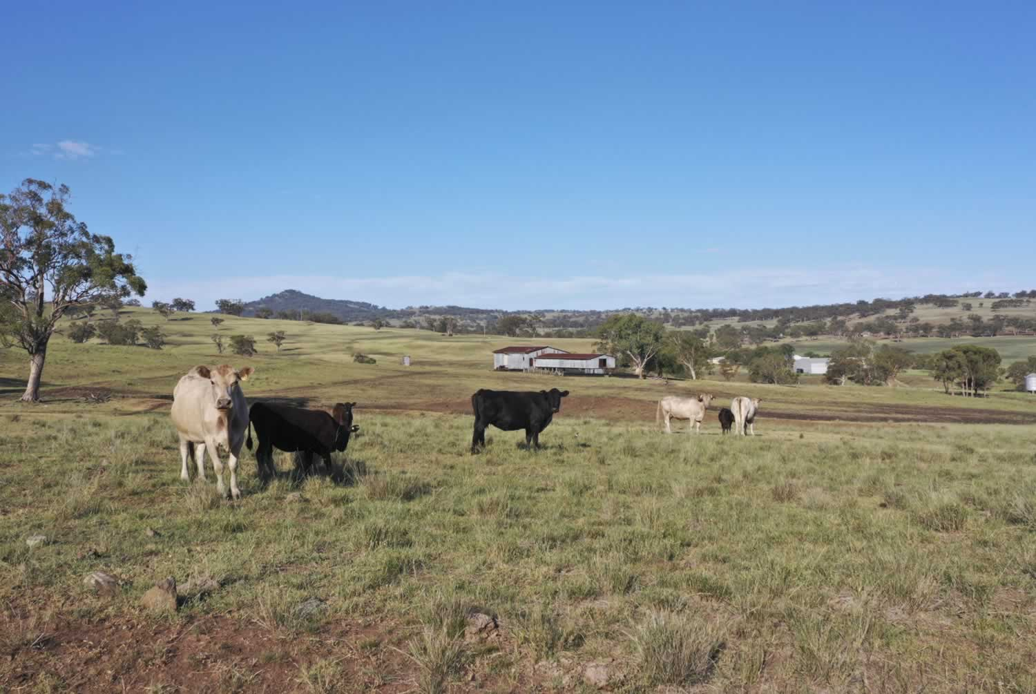 property-for-sale-hunter-valley-7