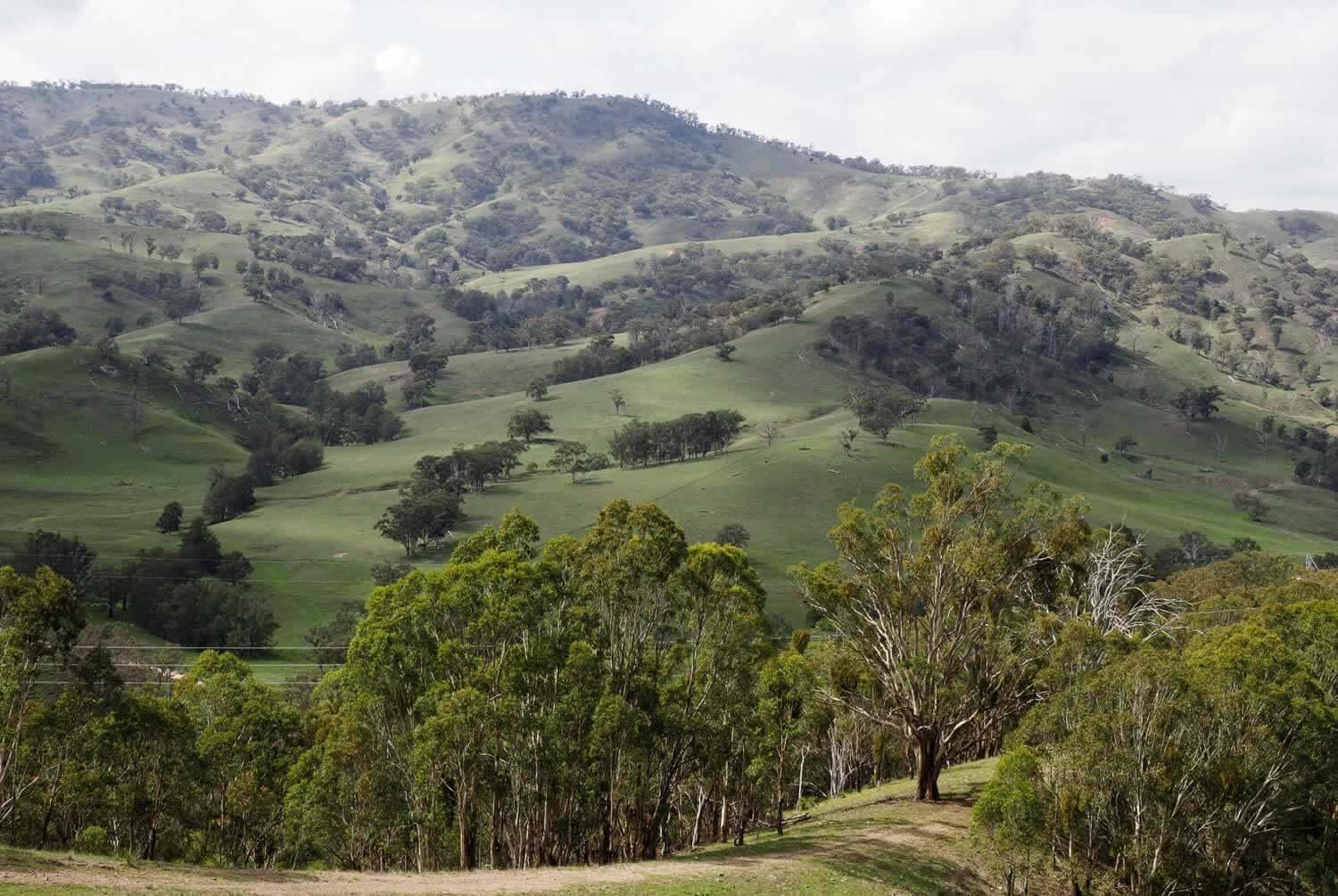 Property for Sale Hunter Valley NSW - Scotts Creek