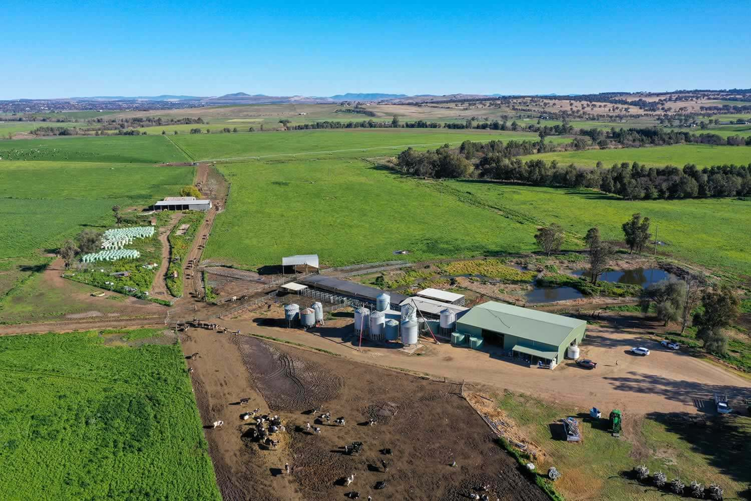 hunter valley nsw dairy farm for sale